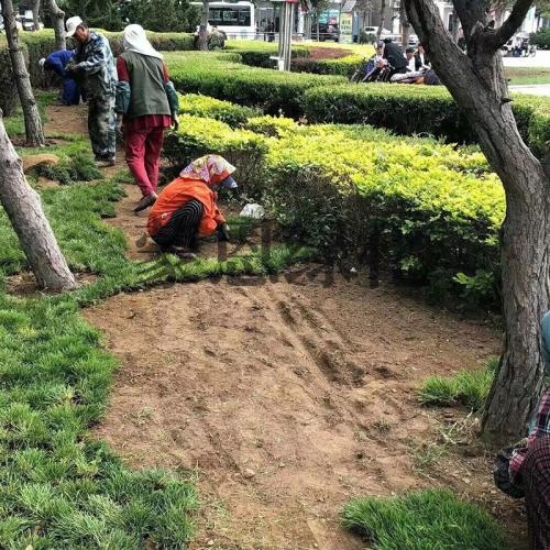 大连草坪施工
