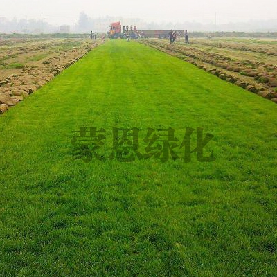 大连绿化草坪