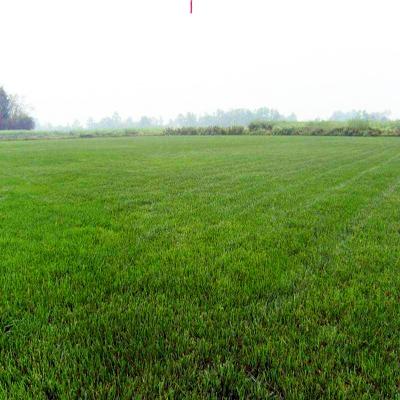 大连市西岗区草坪