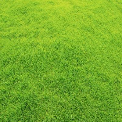 大连市西岗区绿化草坪