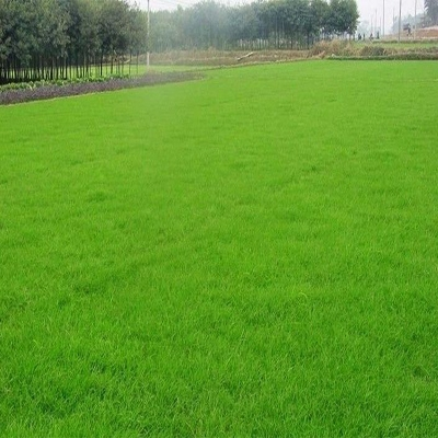 大连市西岗区绿化草坪哪家好
