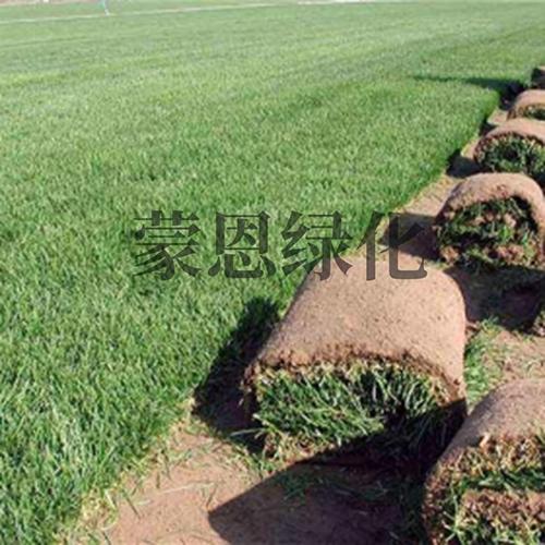 大连绿化草卷
