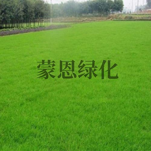 大连绿化草坪哪家好